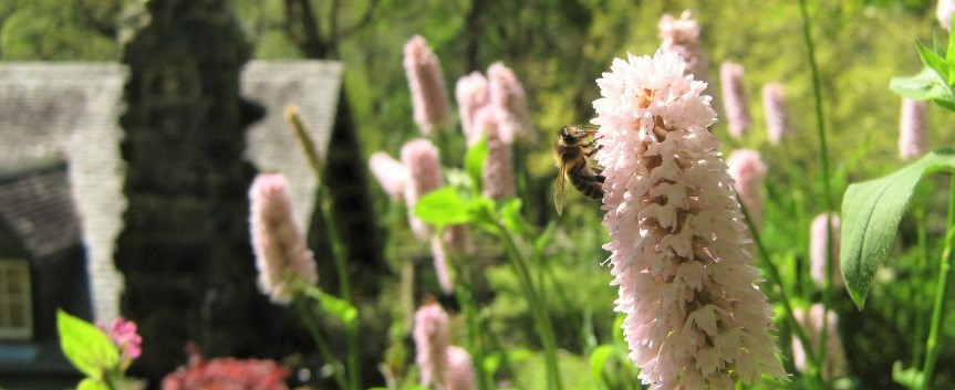 Honeybee-in-Ty-Hyll-garden-980x360