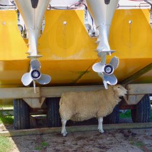bardsey collage - sheep